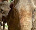 At the elephant village