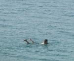 dead-sea-1