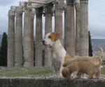 temple-of-olympian-zeus