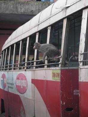 indian-bus