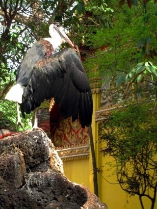 The lesser adjutant stork that guards Wat Simuang's Khmer era shrine