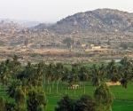 Rice paddies and Vijayanagara ruins