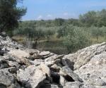 olive-grove
