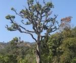 an-eccentric-tree