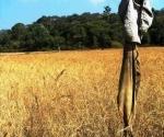 Village Homestay - Karnataka