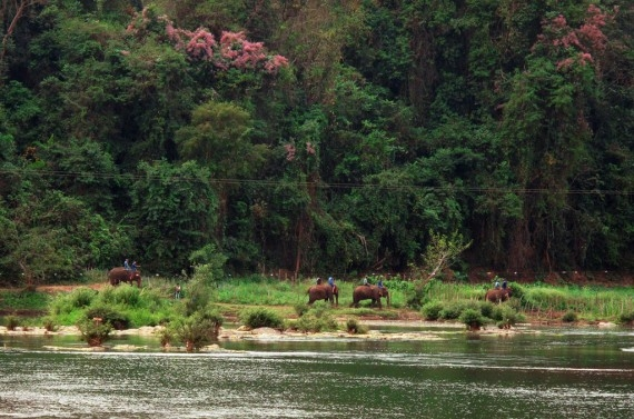 Elephants on the Nam Khan, carrying tourists across the river