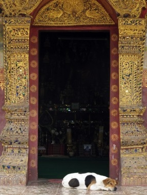 Snoozing at the entrance to Wat Xieng Muang