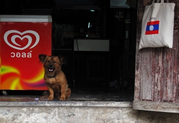 A friendly dog at a shop near our guesthouse, flanked by an ice-cream freezer and a Lao flag on a bag