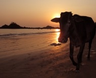 The Curse of Gokarna