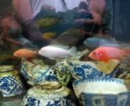 A fish tank in Bangkok's Chinatown